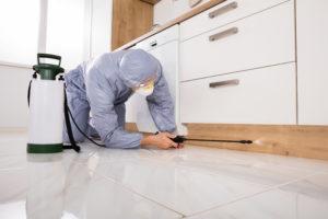 Ravageurs nécessitant des services professionnels