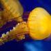 Méduse immortelle : le secret pour tromper la mort
